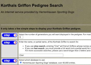 Herrenhausen Sporting Dogs – Korthals Griffon